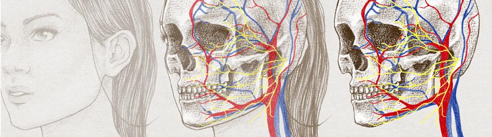http://laurinemoreau.com/corps-humain/anatomie-visage