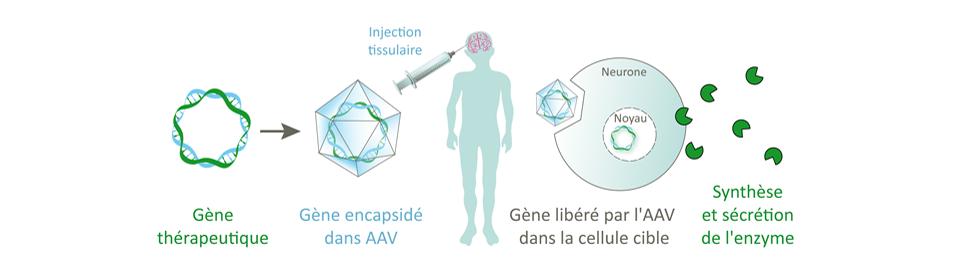 Thérapie Génique – Divers