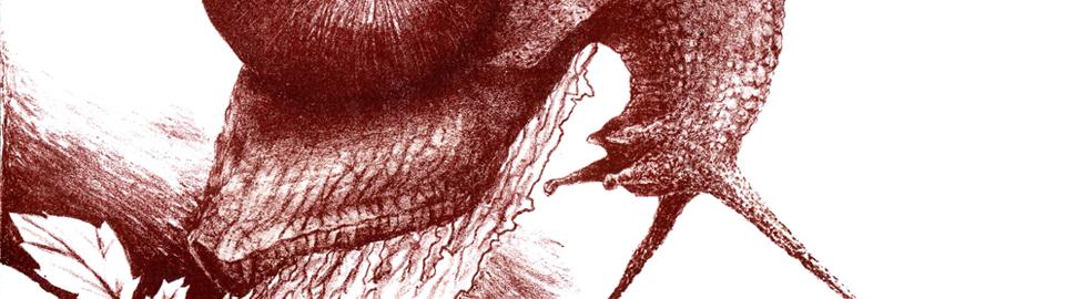Lithographie – Escargot