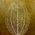 Illustration de botanique représentant une feuilles d'arbre et symbolisant la nature.