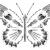 Fanzine Crâne, os, squelette: poster d'illustration d'un papillon, métaphore de l'éphémère, le fragile (blanc).