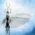 Entomologie, illustration d'un insecte et de ses ailes.