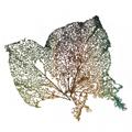 Botanique / Entomologie / Zoologie