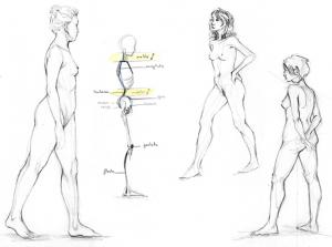 Modèles vivant, dessins fait en cours de nu, le corps humain et sa morphologie.