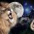 Photomontage kitch avec la galaxie et des lions, art réaliste et bizarre.