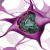 Illustration de la structure et composition à l'intérieur d'un neurone.