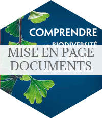 mise en page de document