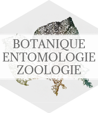 botanique - entomologie - zoologie