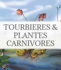 tourbière et plantes carnivores