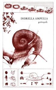 Lithographie originale faite à Estienne, Paris, d'une espèce de gastéropode, l'escargot Indrella Ampulla.