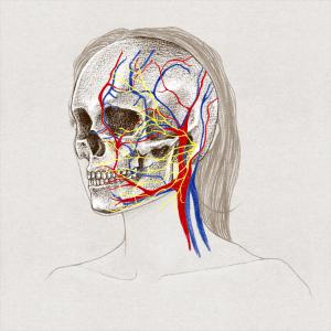 Visage de femme, crâne, veines, artères et nerfs.